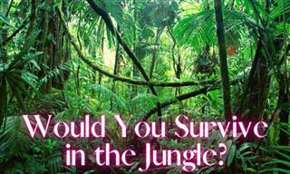 Are <b>You</b> a Survivor?