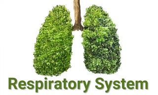 What Do You Know About Your Lungs?