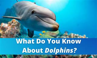 What Do You Know About Dolphins?