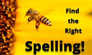 Can You Pass This Stinging Spelling <b>Bee</b>?