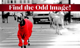 Find the <b>Odd</b> Image Out